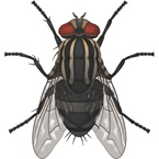 Flies - Pest Control - Bayer