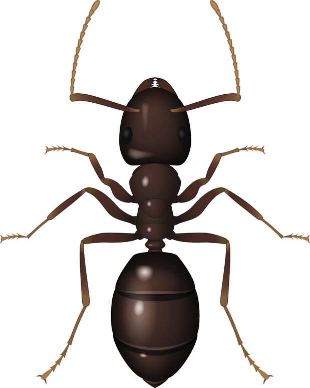 How to control ants; how to kill ants